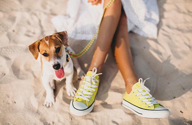 Dog vacation dangers: heatstroke