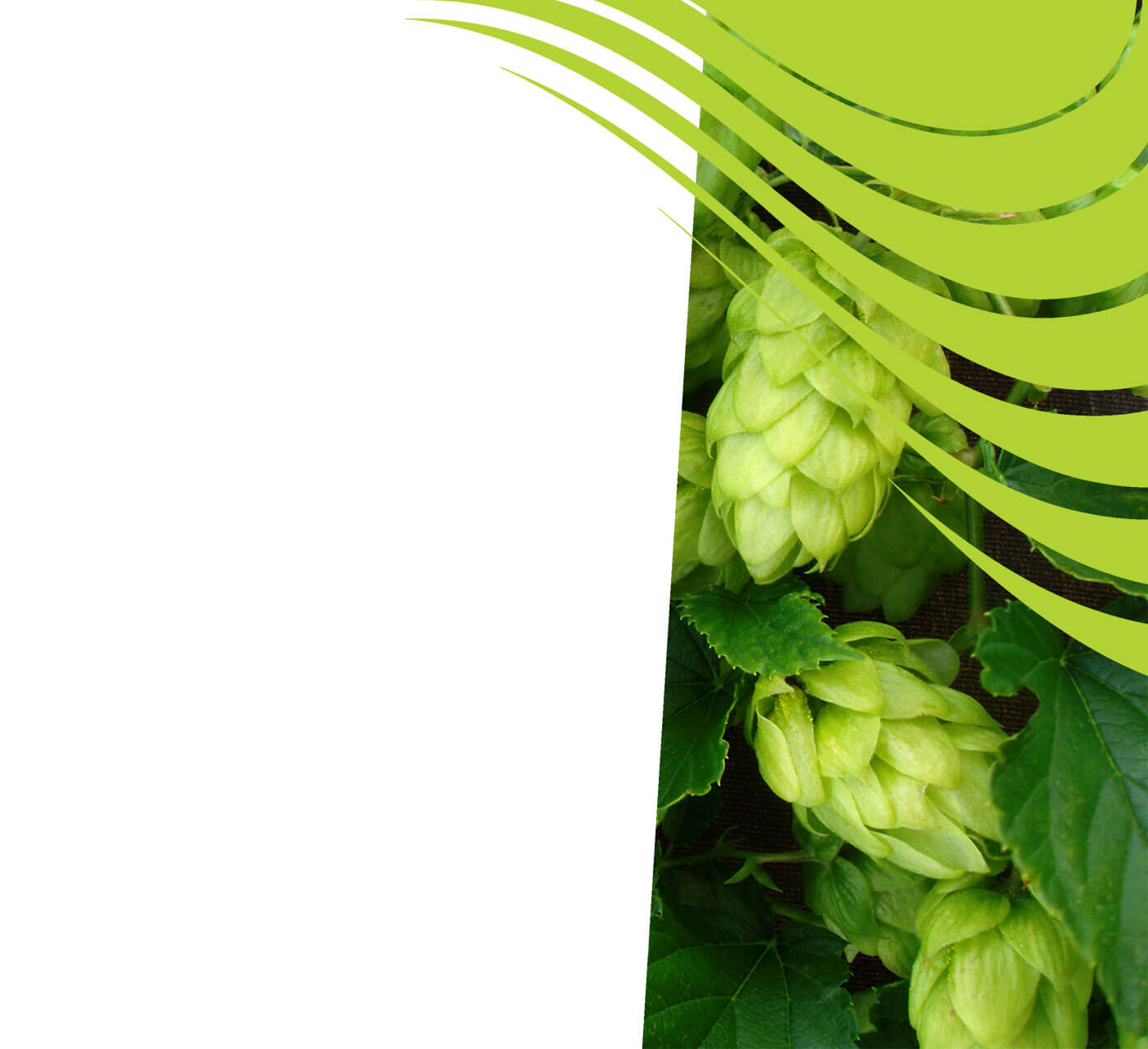 fertiliser for hops