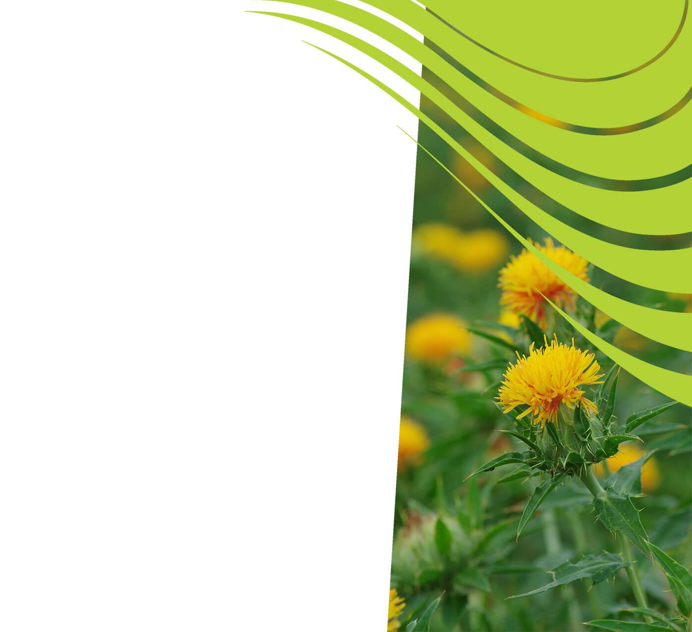 fertiliser for safflower