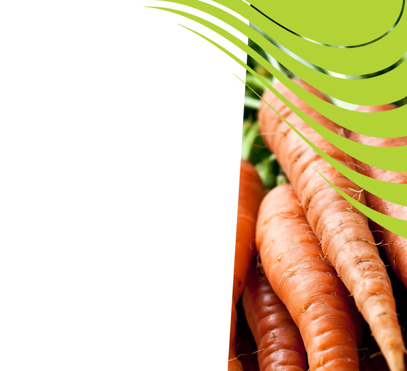 fertiliser for carrots