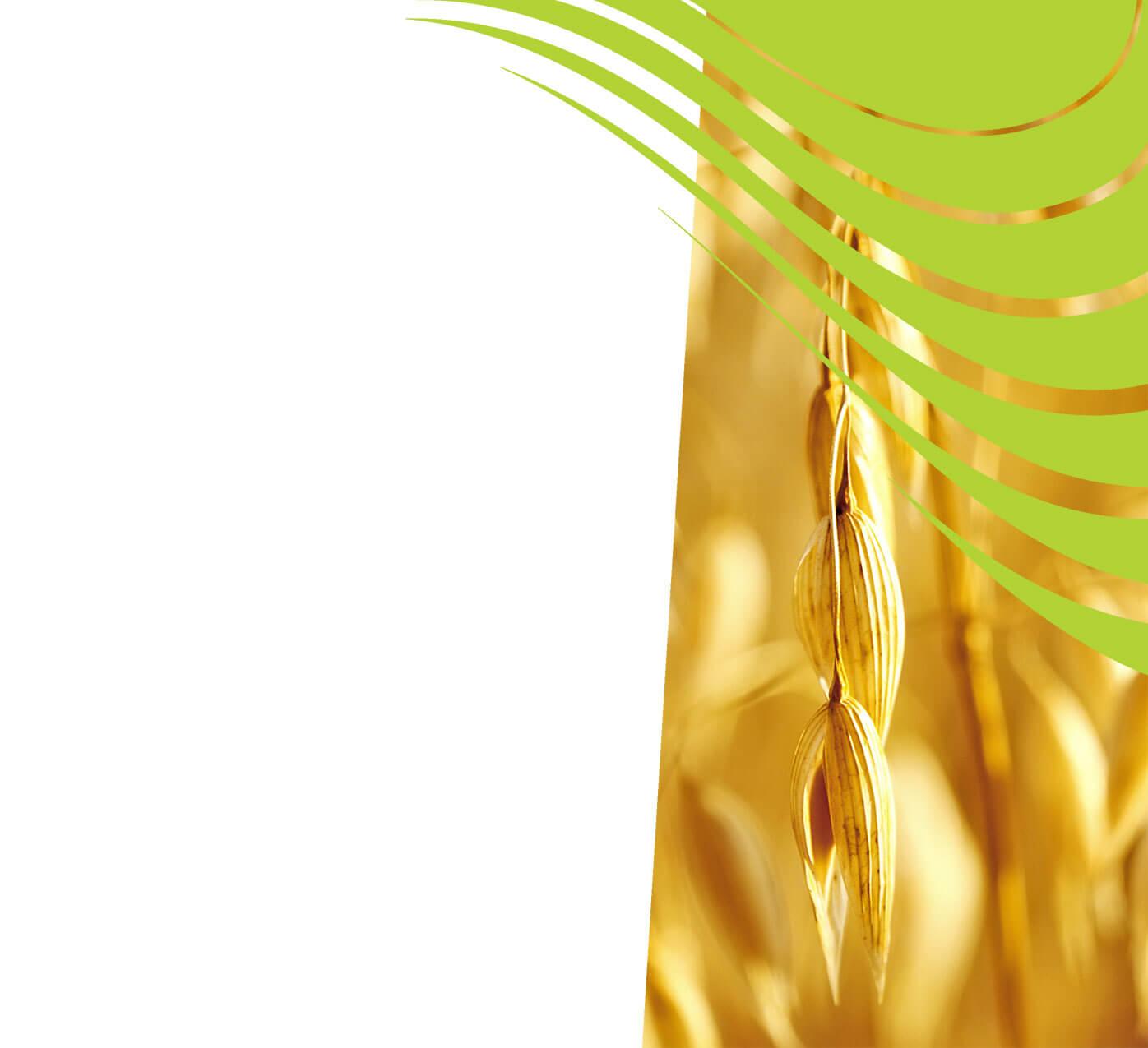 fertiliser for oats