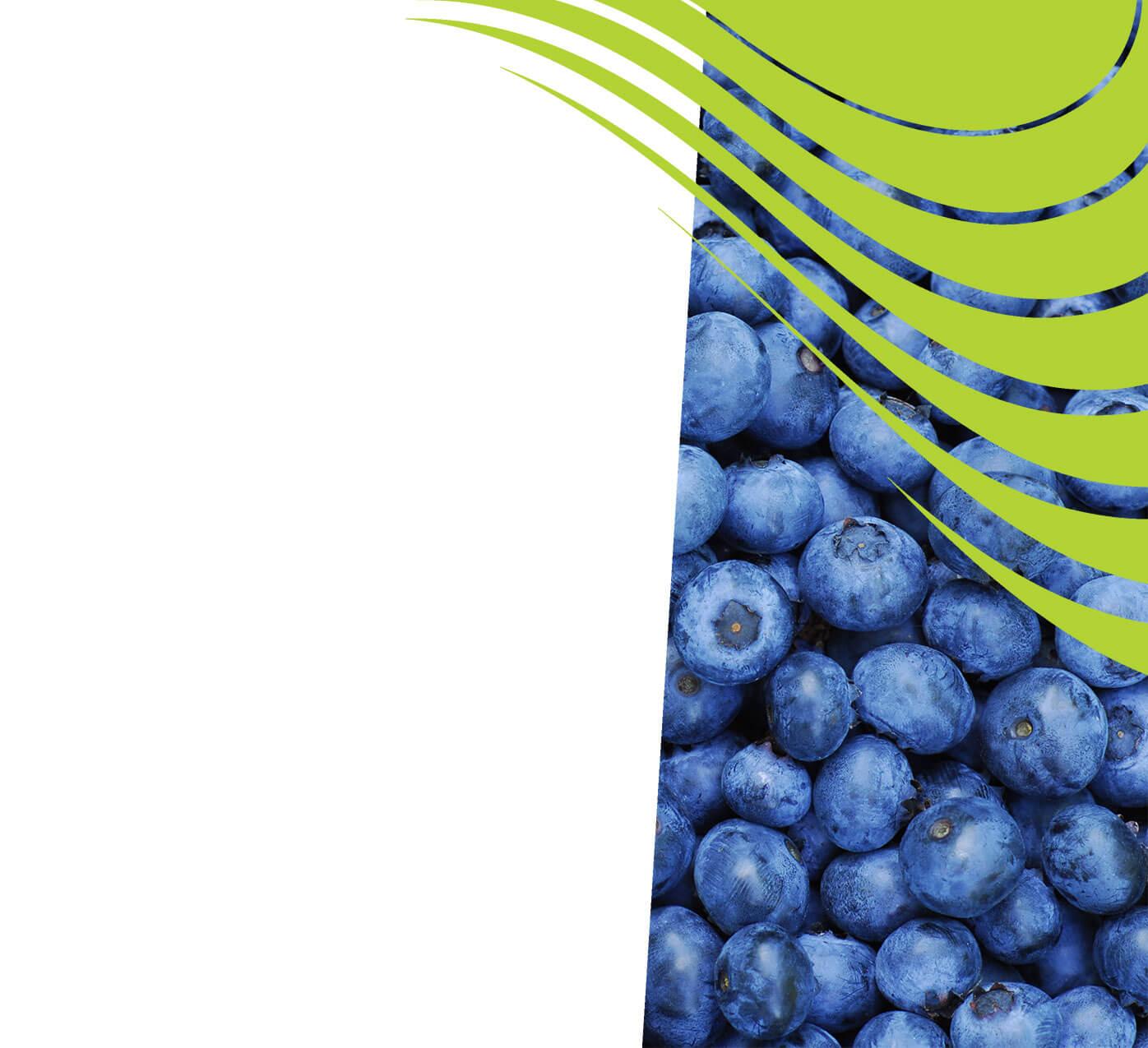 fertiliser for blueberries