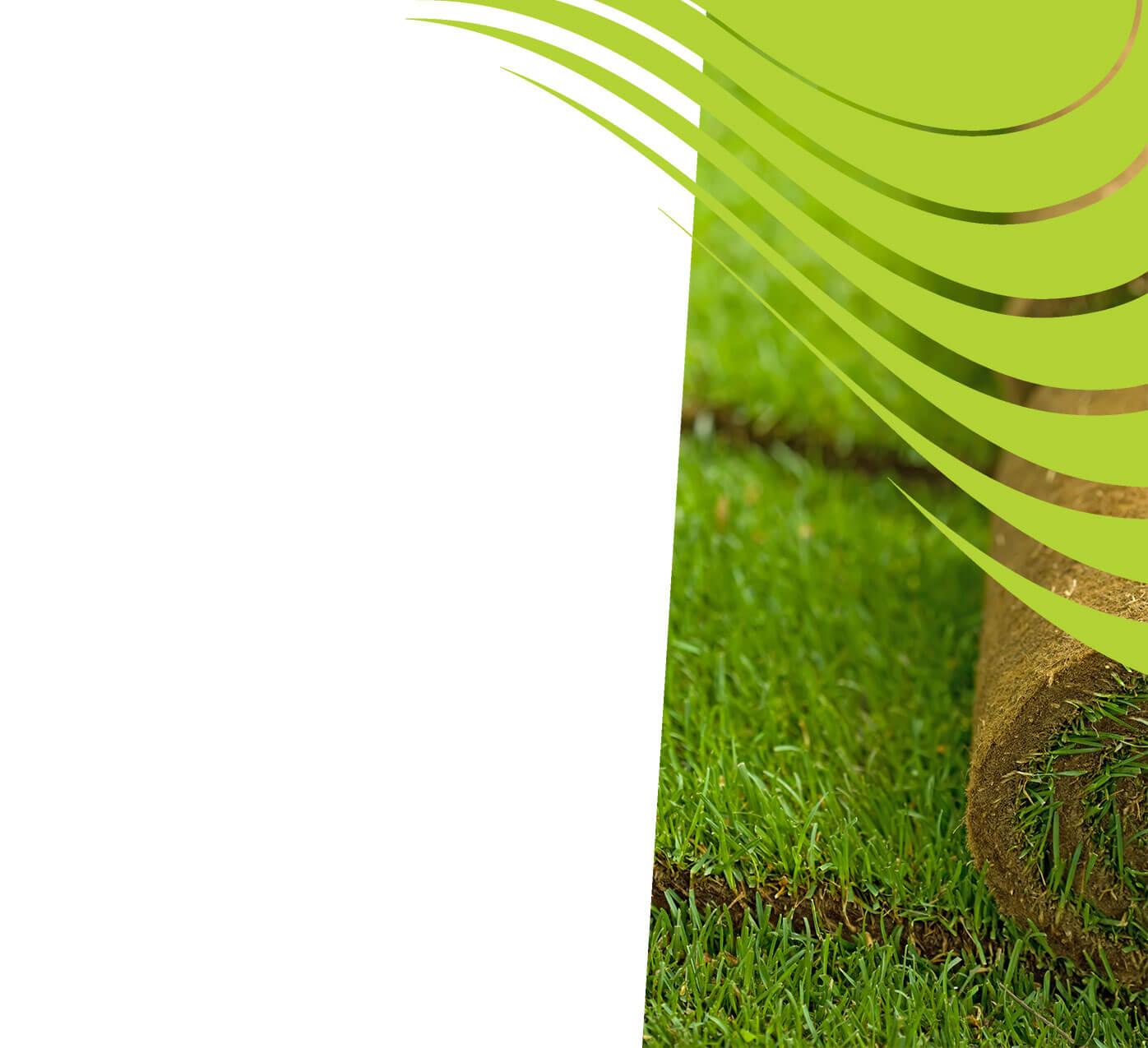 fertiliser for turf