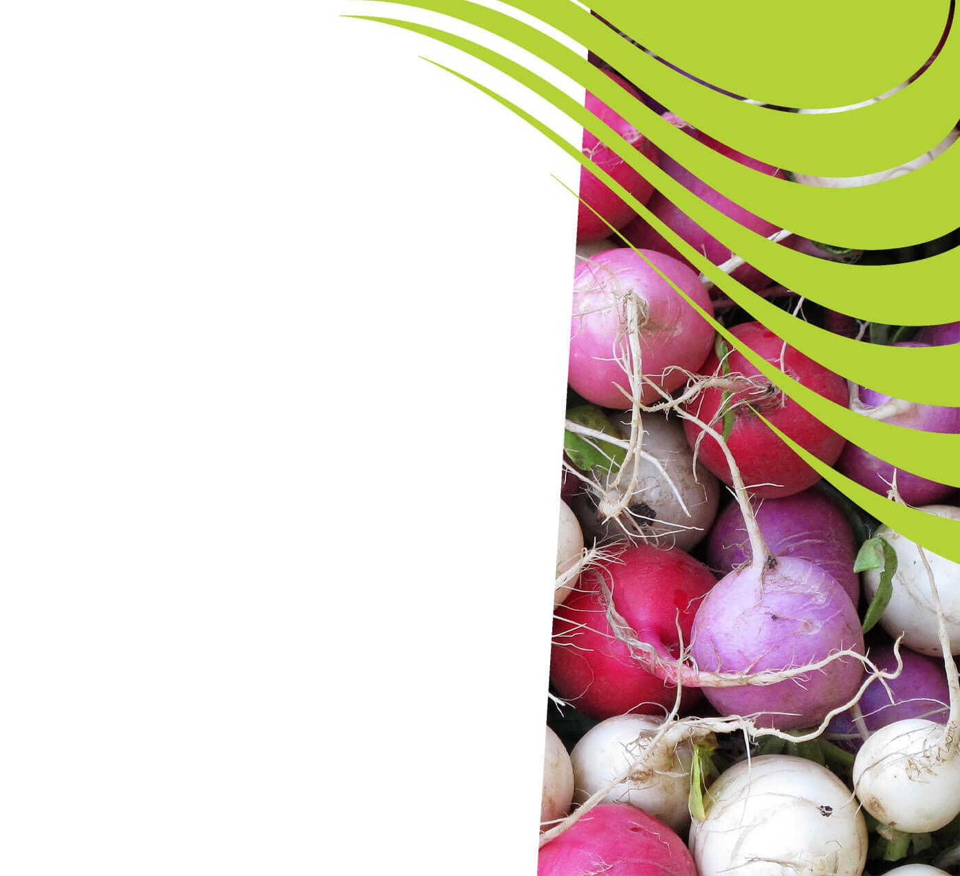 fertiliser for radishes