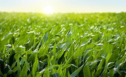 farm saver zinc-fulvate