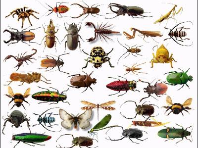 bugs.jpg