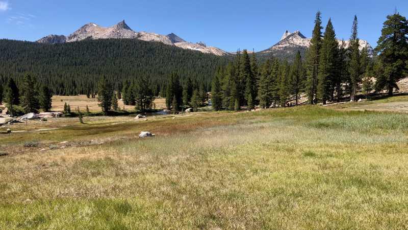 A grassy meadow