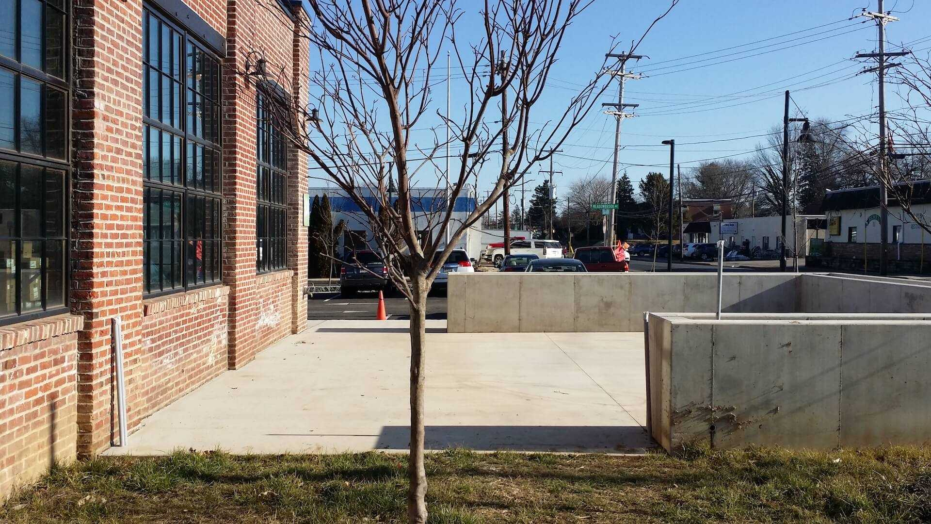 thin tree in front of concrete area
