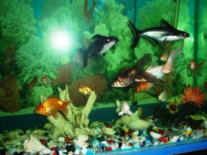 Feeding Fish: How Much is Enough?