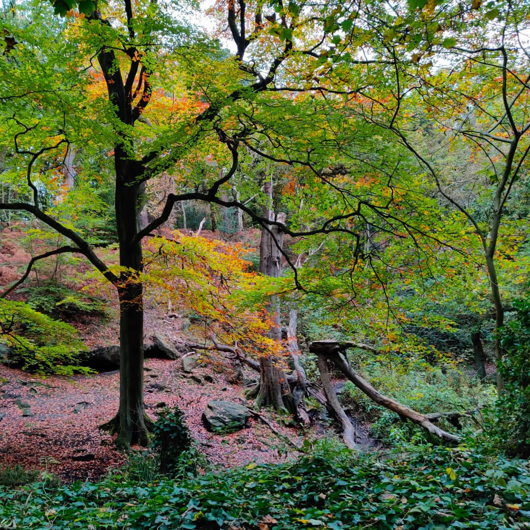 Meanwood Valley Local Nature Reserve hill in Adel Woods