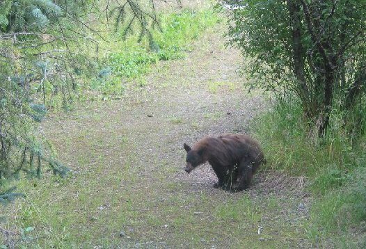 Bears Do