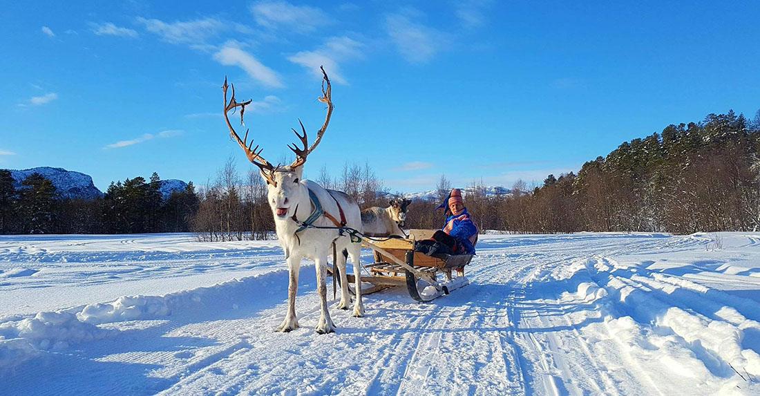 Sorrisniva Reindeer and Sami Experience in Alta Norway