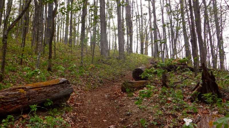 Wet trail