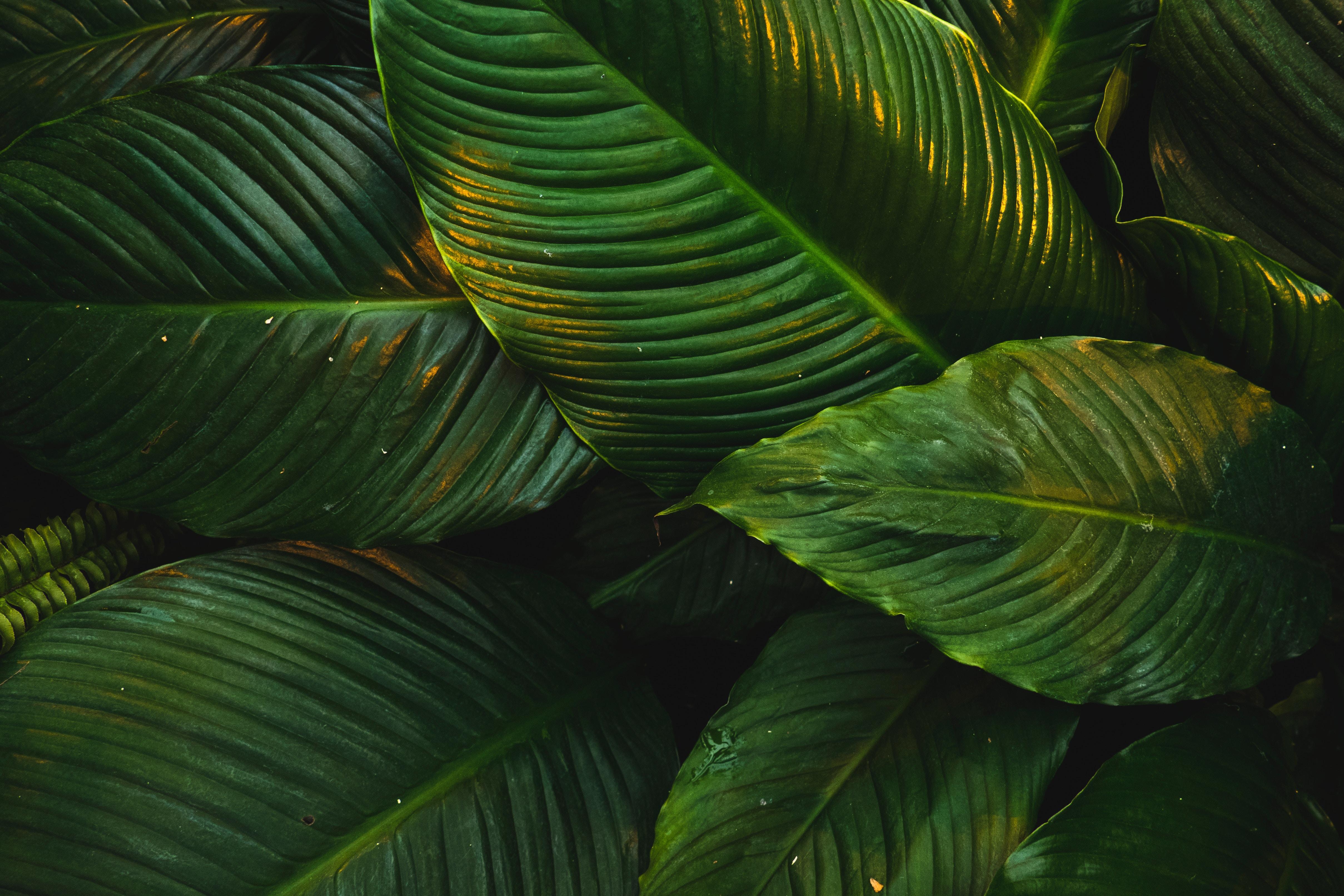 Imagem de copas de árvores