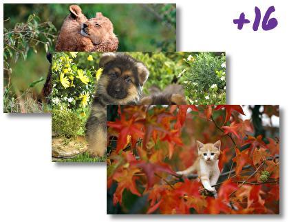 Baby Animals theme pack
