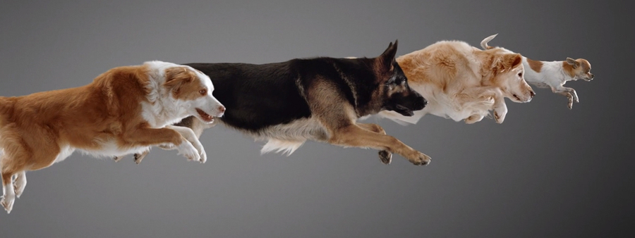 Artevite campaign still of dogs jumping