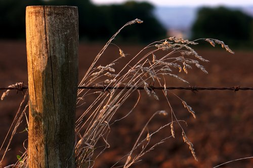 Fence and Dead Grass 1331