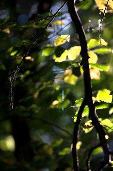Leaves+Branch 1585