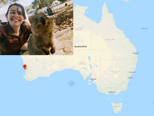 Quokkas are smiling, friendly creatures that live off the coast of Perth, Australia