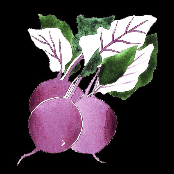 vegetable 6