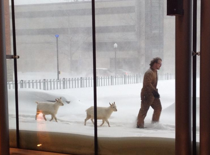 Dave taking Bob and Doug for a walk through a snowstorm