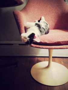Our cat Watson in a tulip chair