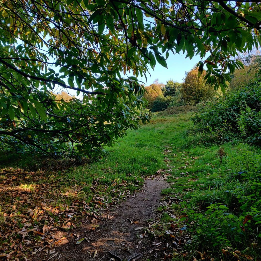 Otley Chevin Forest Park wood with winding path