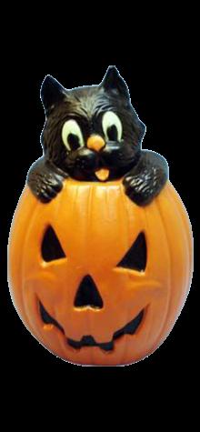Cat In A Pumpkin photo