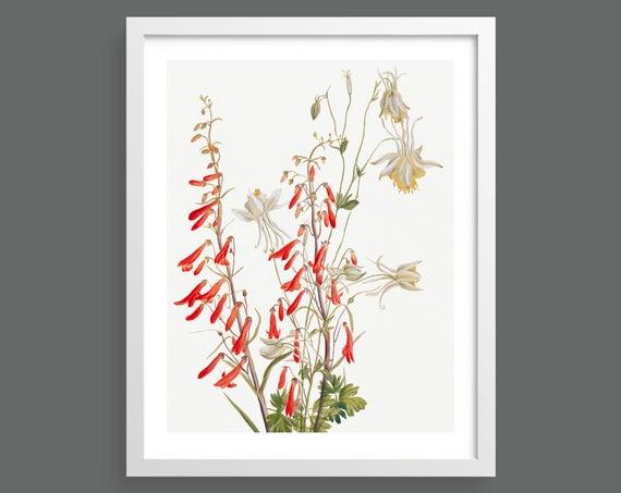 Flower Study by Mary Vaux Walcott