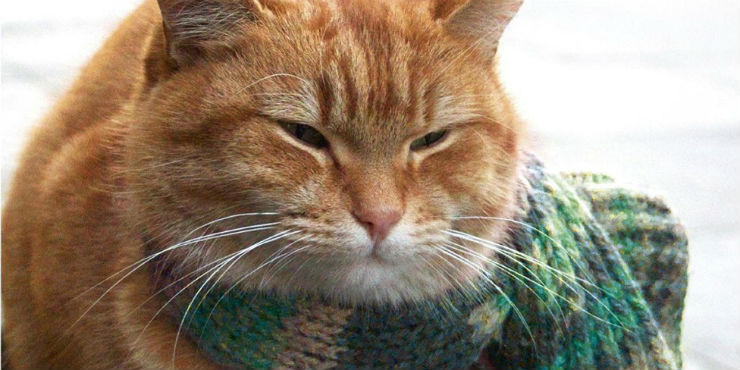 A street cat named Bob: how one man and a cat saved each other's lives by James Bowen
