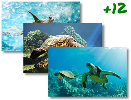 Sea Turtle theme pack