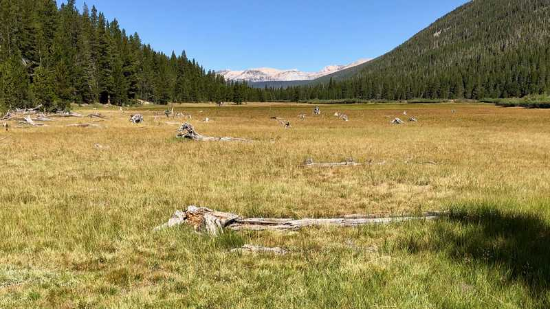 Wide meadow in Lyell Canyon