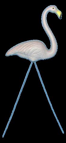 Gray Flamingo photo
