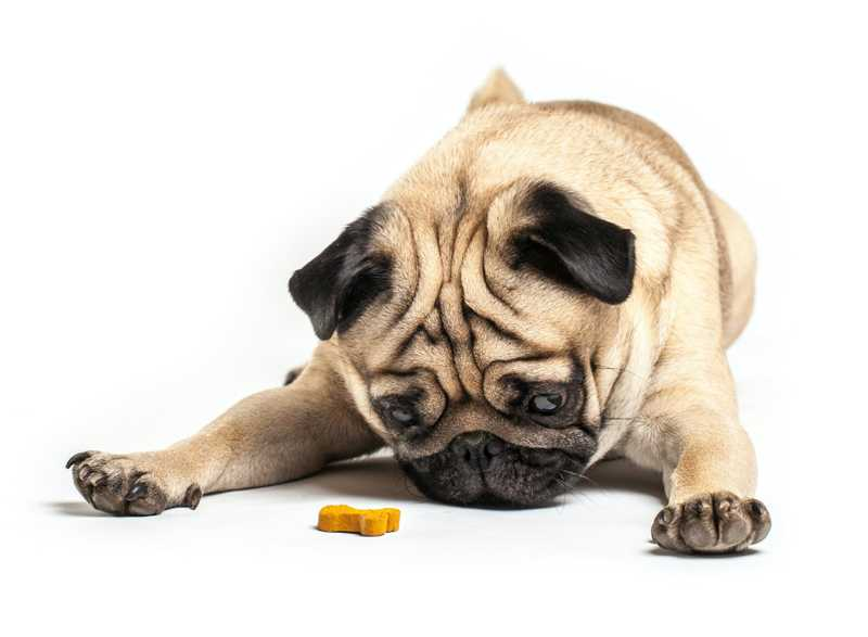 DIY Recipe: Peanut Butter & Pumpkin CBD Dog Treats
