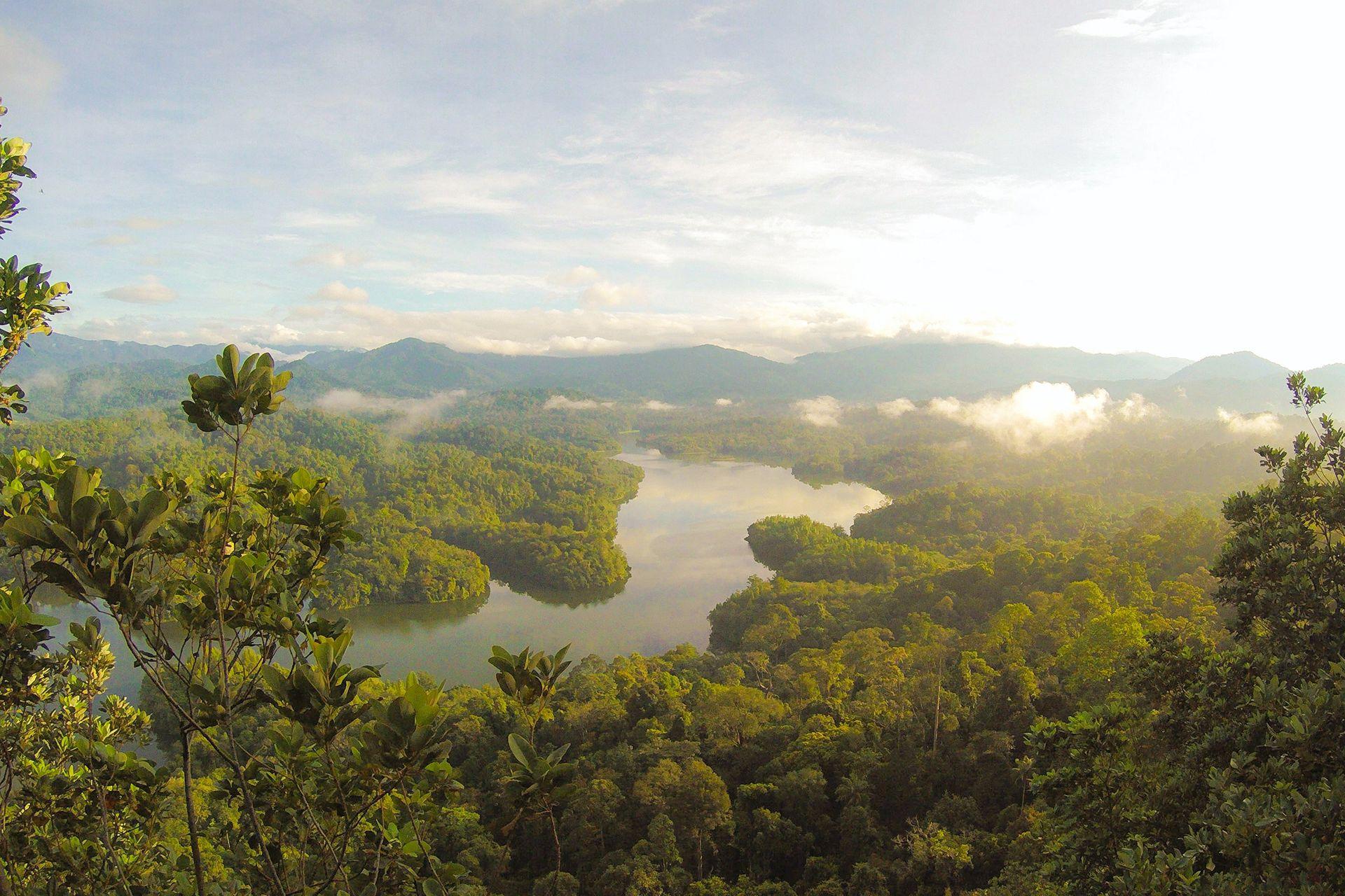 Rainforest Sounds | Pluvioniverse