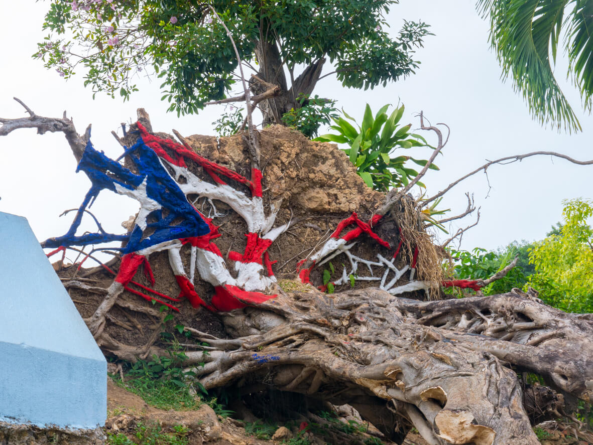 Puerto Rican flag painted on an uprooted tree after Hurricane Maria.
