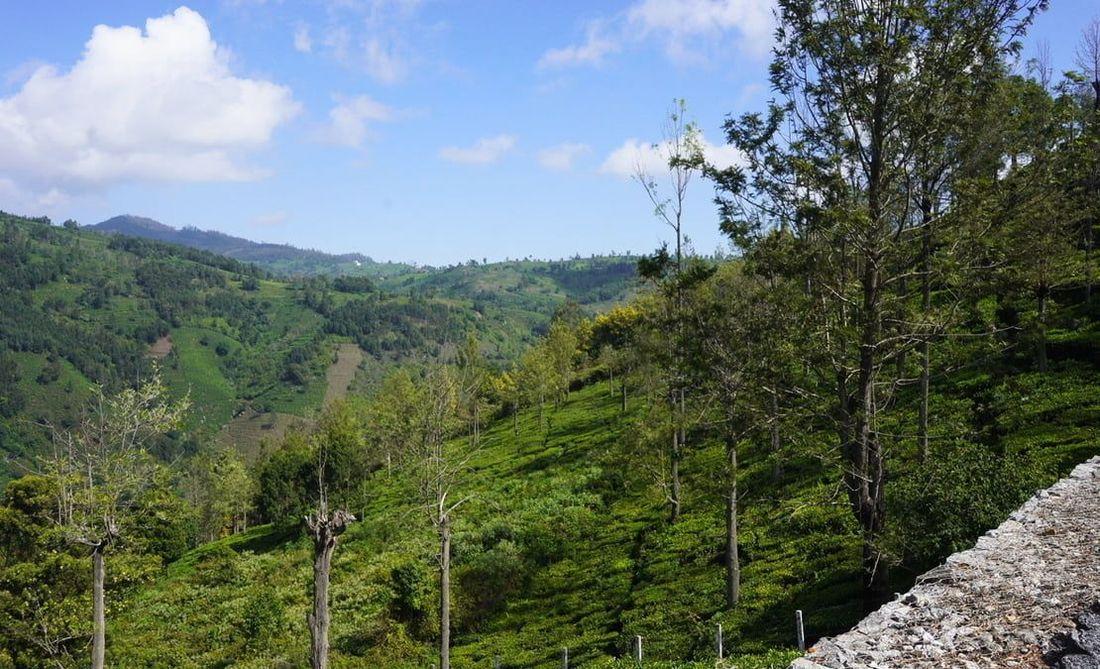 View northward into the Halakarai valley, Coonoor - Kotagiri side