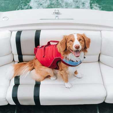 6 Reasons Your Dog Needs a Life Jacket
