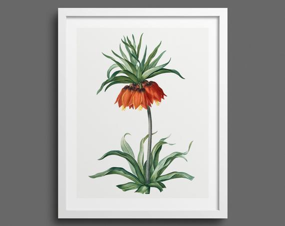 Kaiser's Crown (Fritillaria) by Pierre-Joseph Redouté