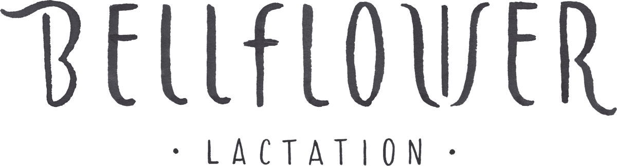 Bellflower Lactation