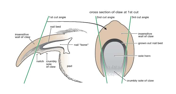 Tail anatomy
