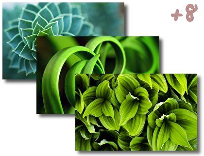 Green Plant Leaf theme pack