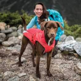 Backpacking with Your Dog Infographic