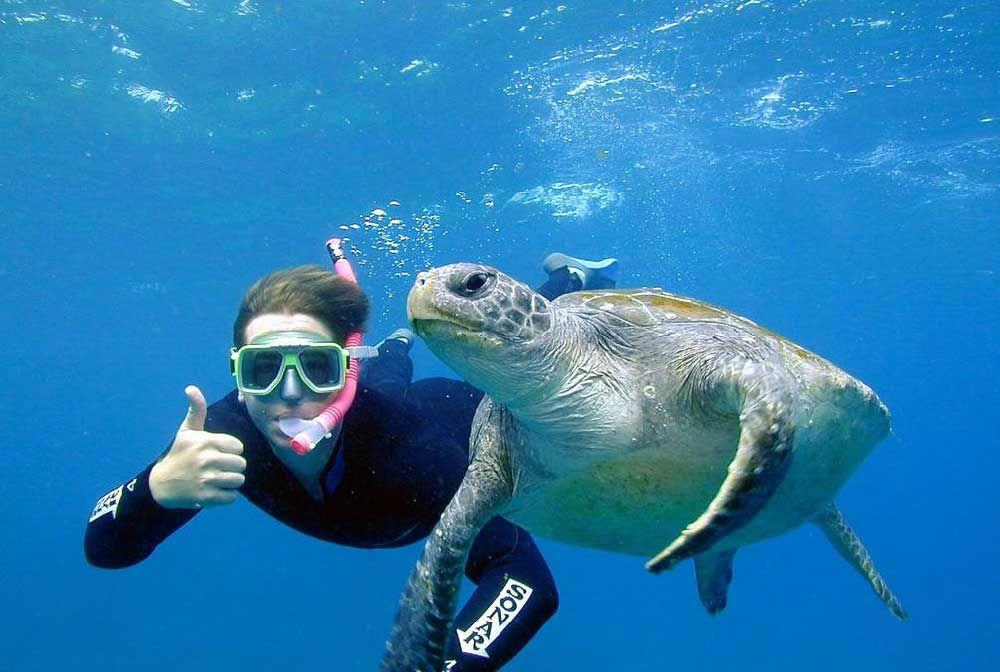 Turtle Snorkel Tour