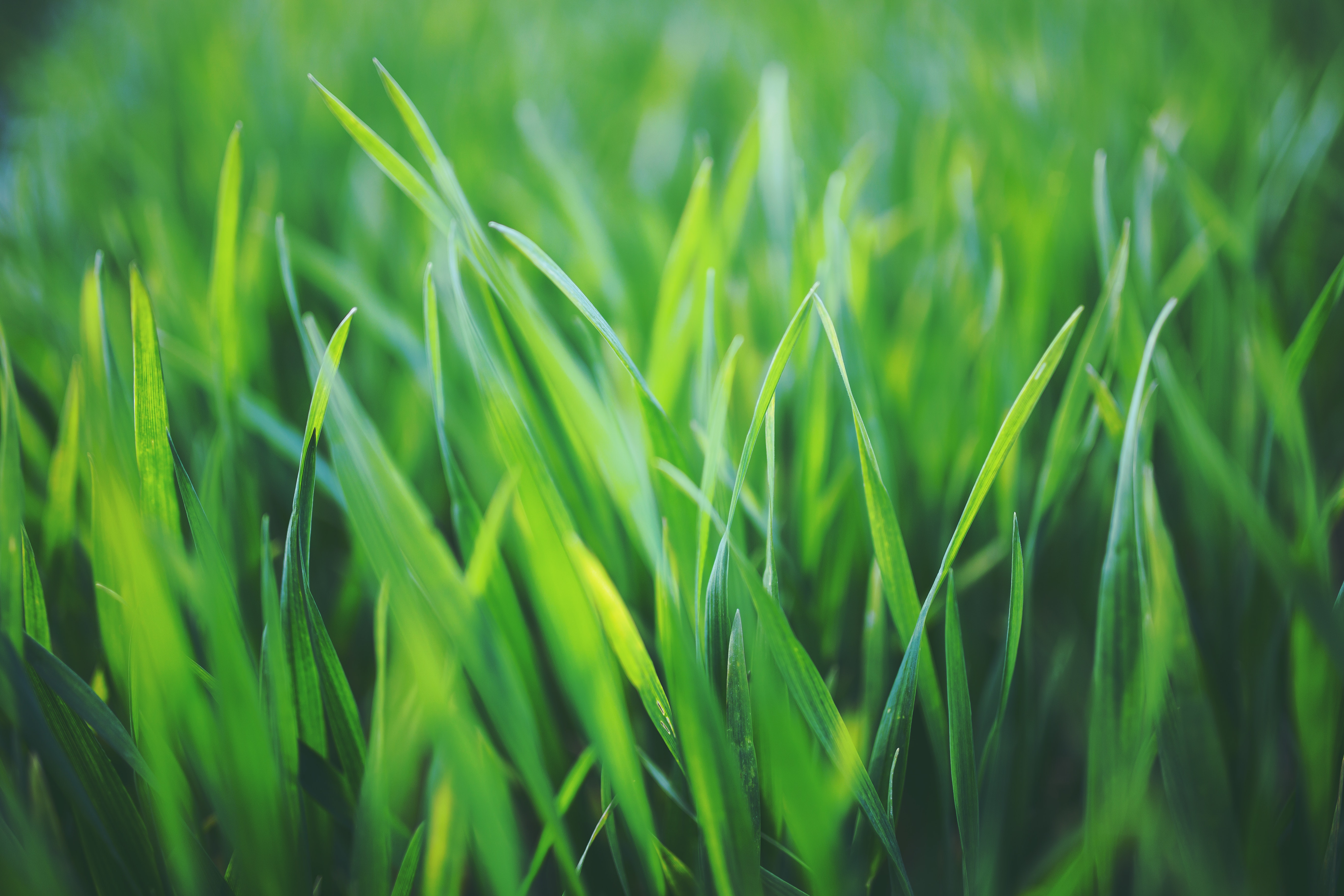 Picture of a lawn