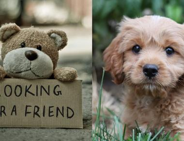 Top 16 Teddy Bear Dog Breeds You Will Adore
