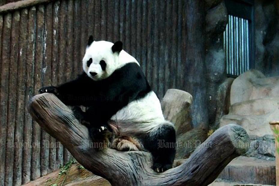 Lin Hui im Chiang Mai Zoo