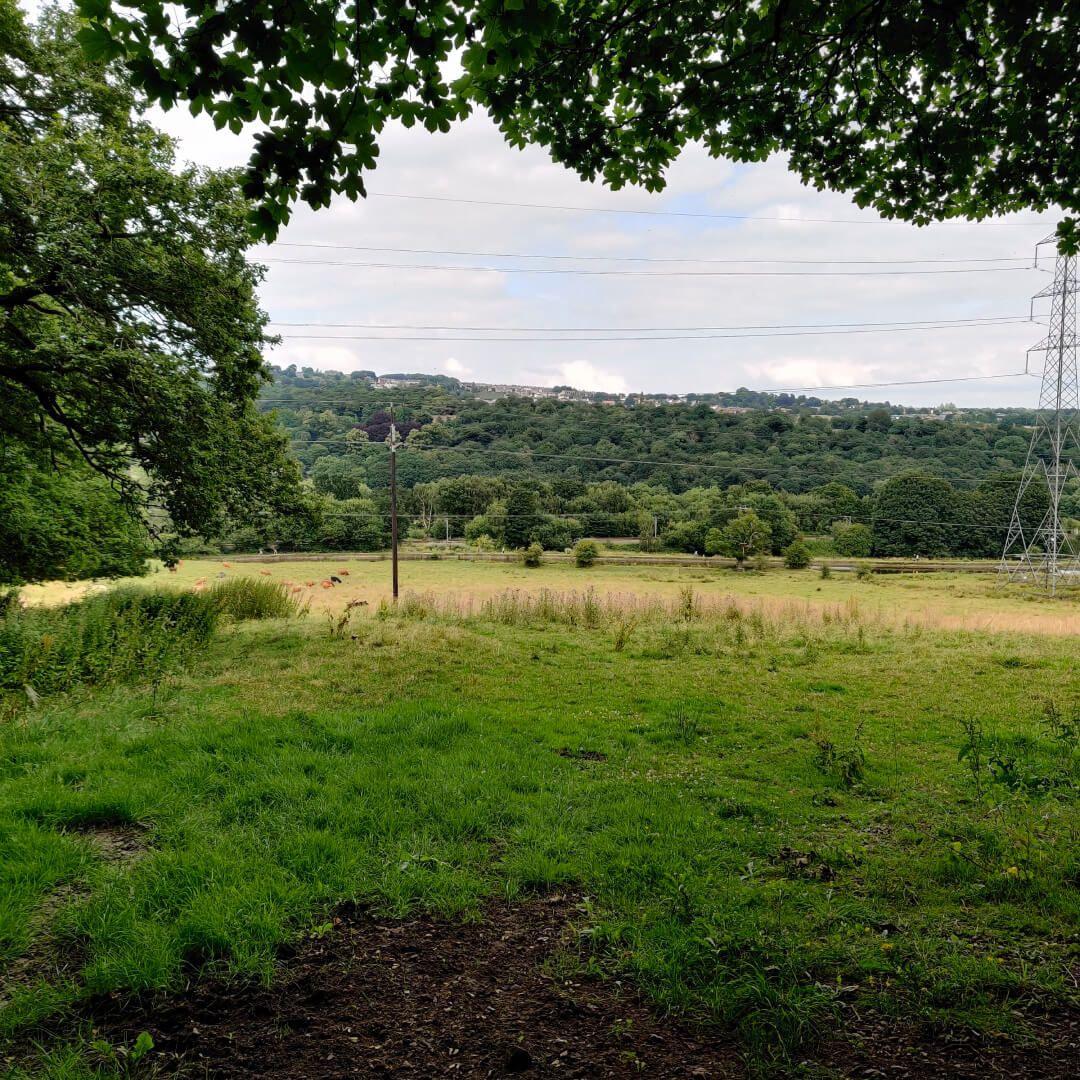 Calverley Wood view