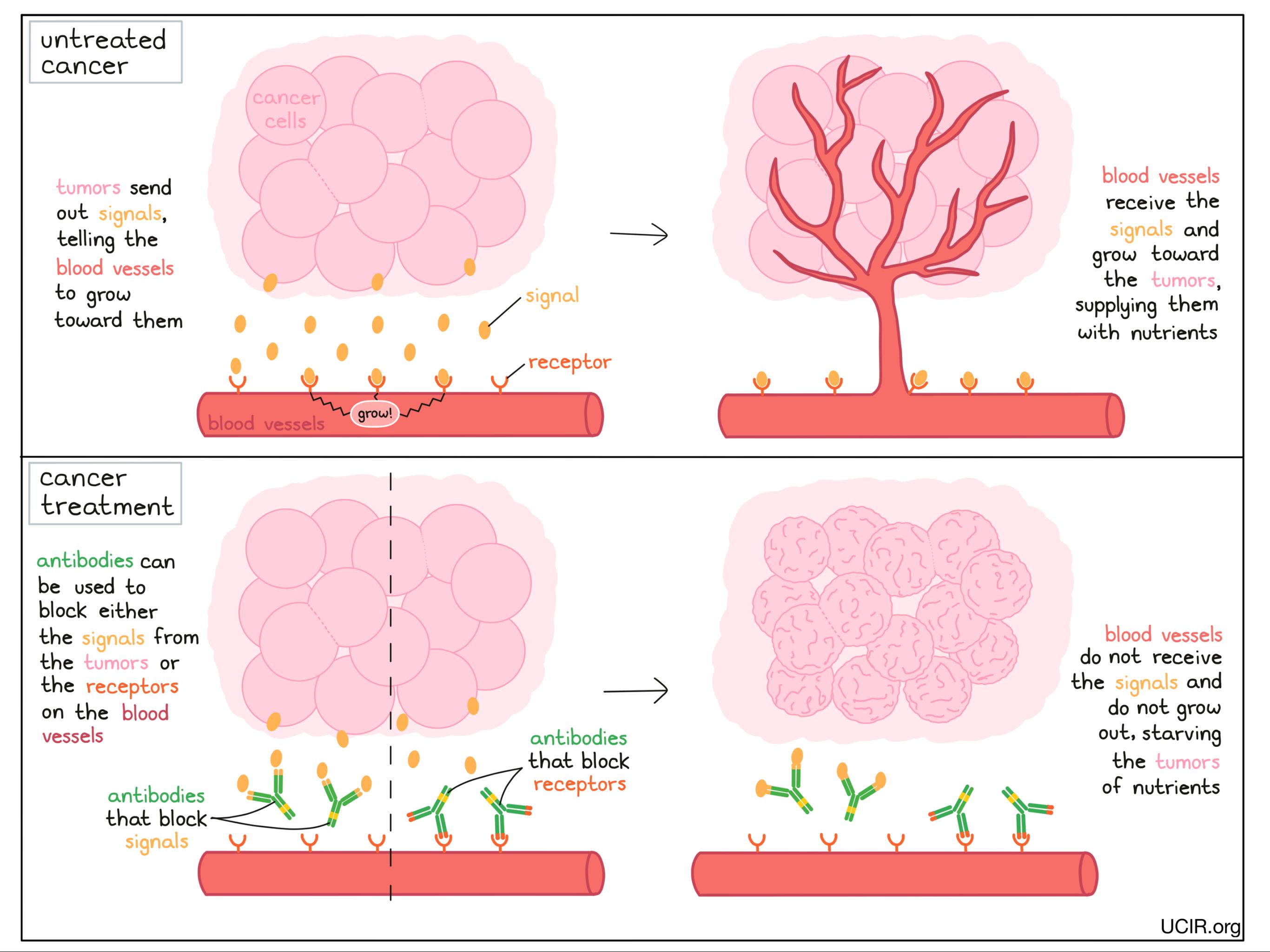 Illustration of angiogenesis inhibitors