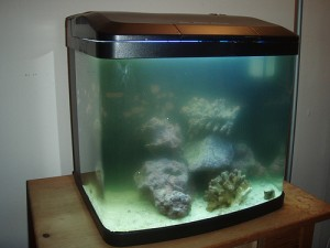 Clean A Fish Tank With Filtration